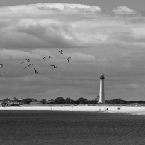 Birds and Cape May Lighthouse