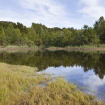 Small Pond and Reflections at Higbee Beach