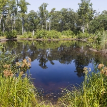 Small Pond at Ponder Lodge