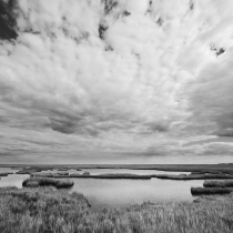 Salt Marshes of Southern New Jersey
