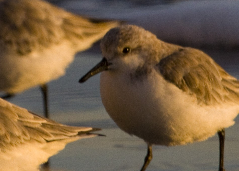 Sand Piper Test (crop)