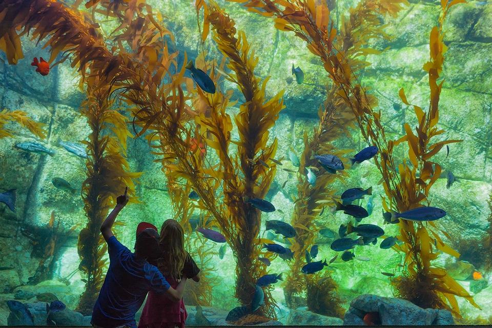 Kids at Birch Aquarium