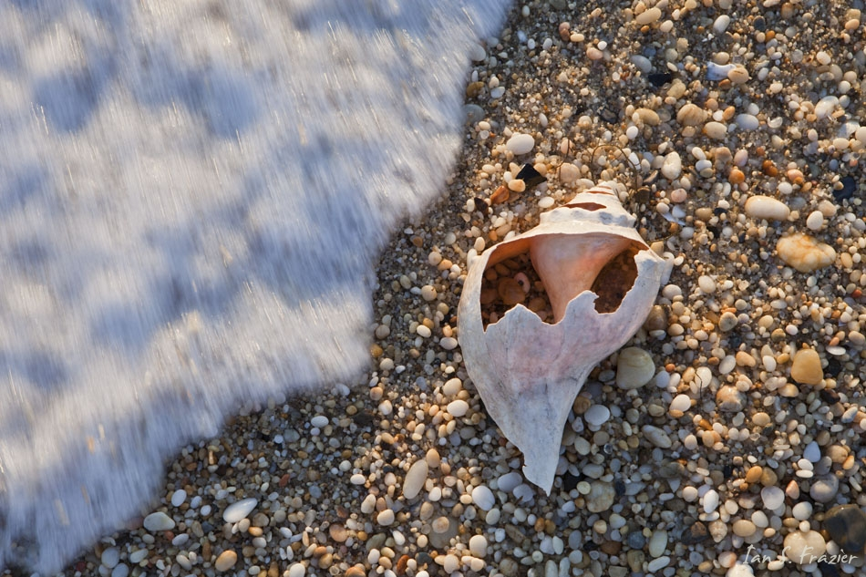 Wave and Whelk Shell